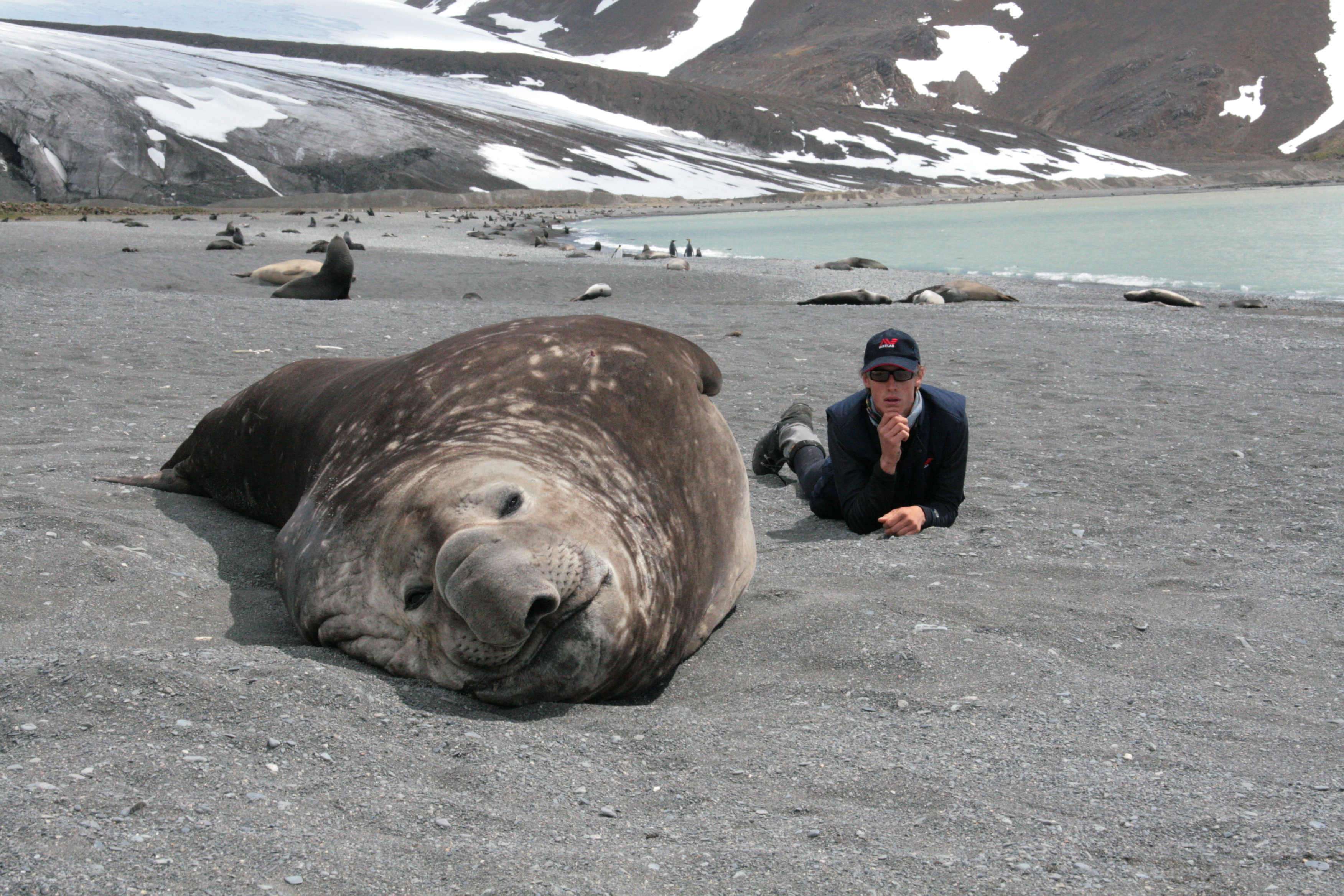 Elephant Seal and GB on South Georgia